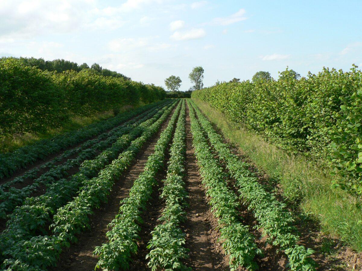 Boeren tonen interesse in Boslandbouw
