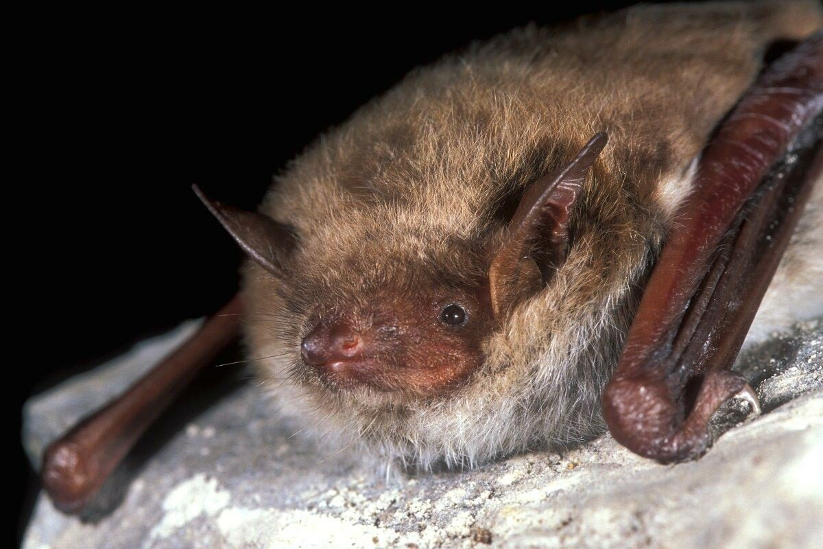 Bats yn Byld