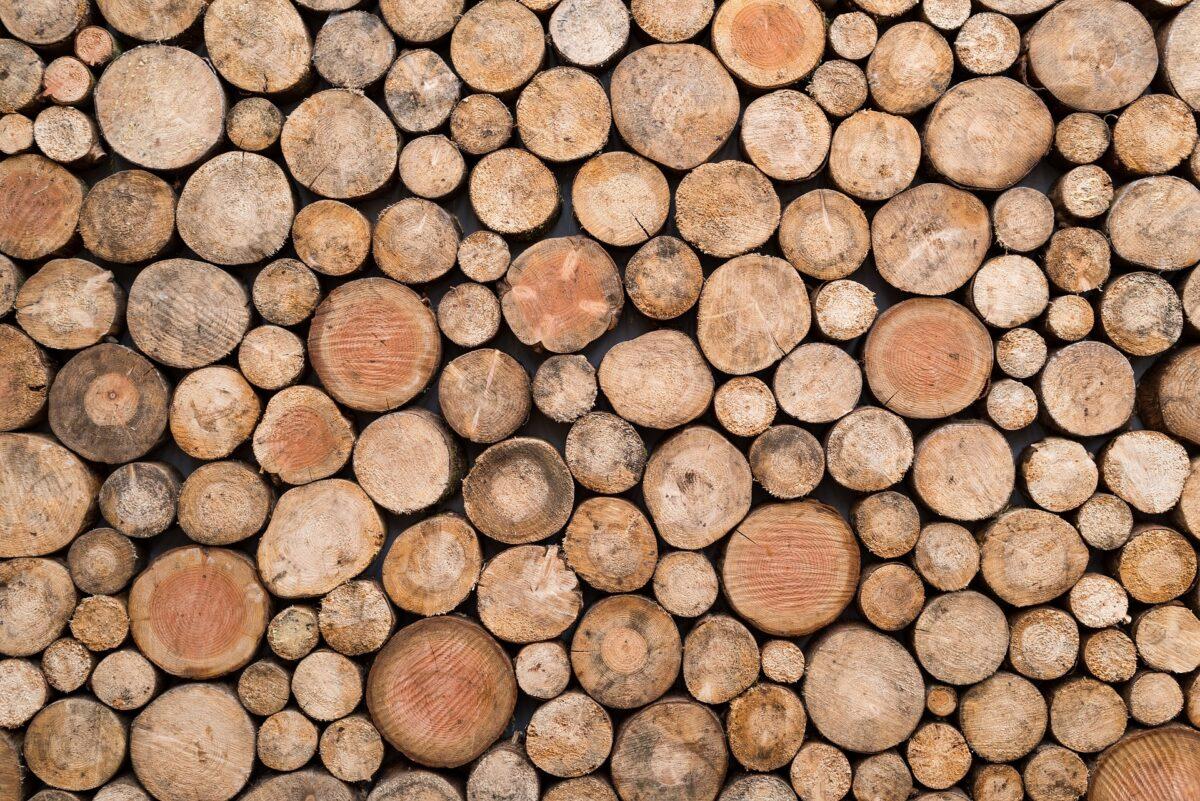 Oproep aan Wiebes: Stop per direct met de bijstook van biomassa in kolencentrales