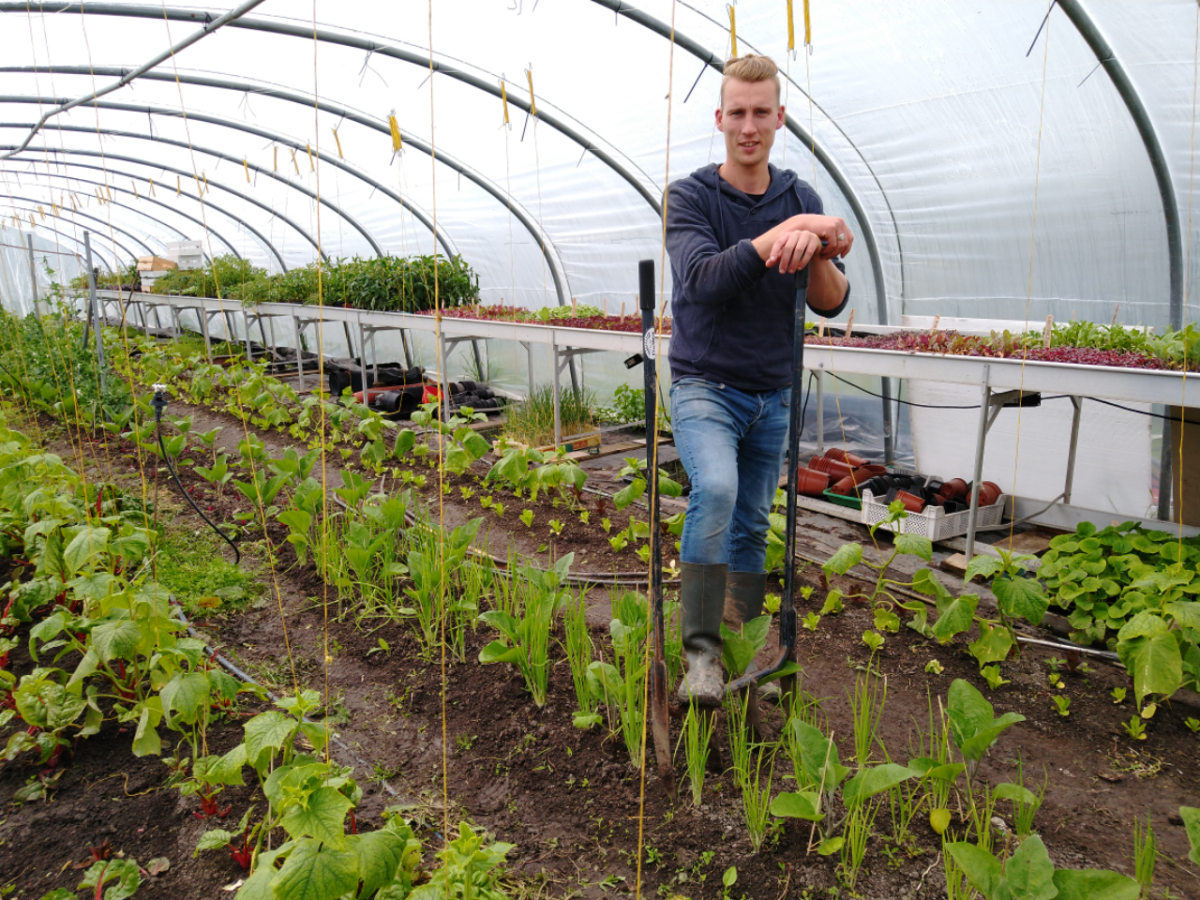 Vitale Friese Bodem: Plattelandspionier Joël van den Broek teelt veertig verschillende groenten op zijn Yn'e Sinne Farm